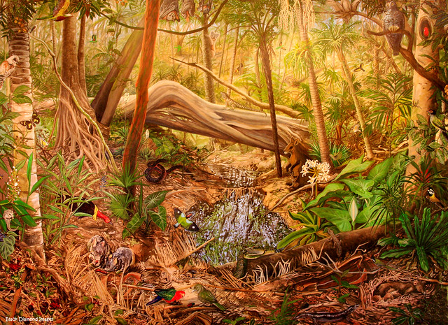 Sea Acres Rainforest Nature Reserve - Australian Subtropical Rainforest Mural