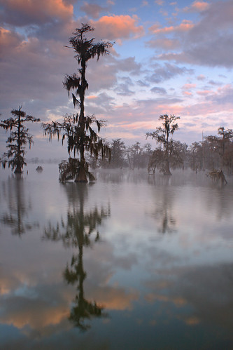 morning trees mist lake reflection fog sunrise la louisiana ben swamp pierce cypress peninsula preserve lakemartin breauxbridgewater