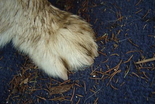 muddy paw