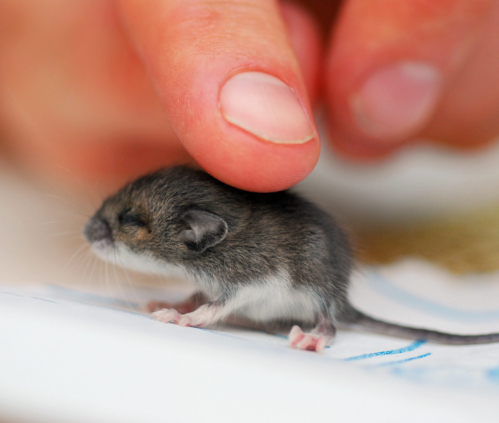 smallest-animals-in-the-world