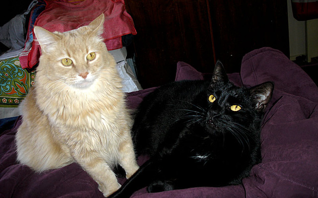 Happy 4TH Birthday Champaz And Blacky!! 9/11/2010..