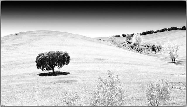 La sombra del paisaje