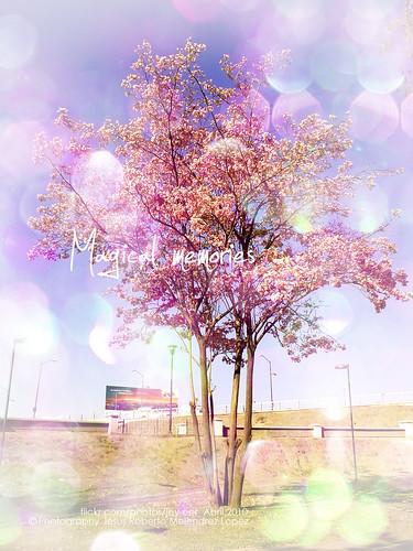 magic recuerdos magico memorias recuerdosmagicos magicalmemorias