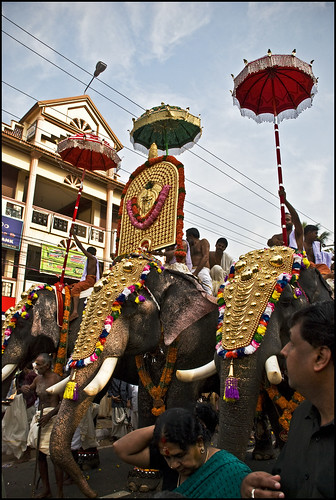 pachyderm kerala elephants procession umbrellas kuda diety keralam pooram thrissurpooram lordkrishna godsowncountry tuskers elephantfestival nikond80 caparisons purappadu rajeshvijayarajan rajeshvijayarajanphotography rajeshvj anachamayam thiruvambadytemple ambadykannan sceneat8am gettyimagesindiaq4