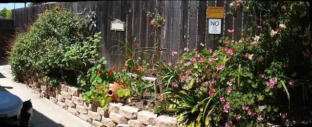 100428 sammy checks for lizards kitchen side flowers PScs4 E3 3270 2