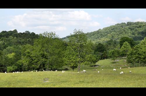 trees field virginia hills scottcounty