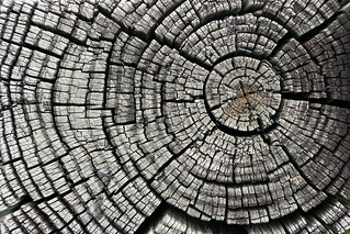 Cracked Tree Stump | by GrungeTextures