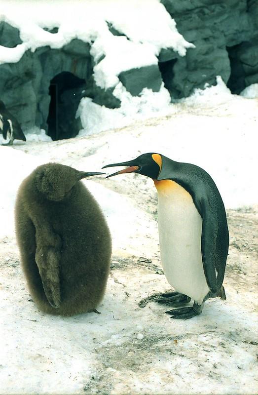 ペンギン カワユス by Noël Café