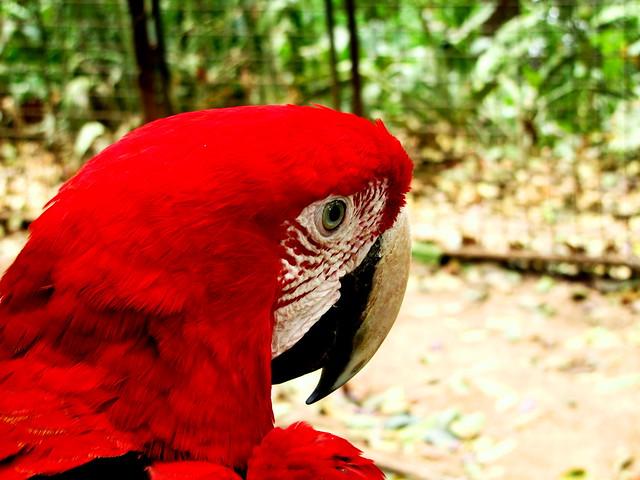 scarlet glance