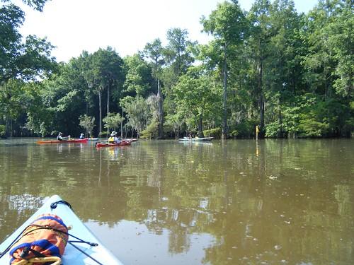 sc unitedstates southcarolina kayaking paddling lakemarion sparkleberryswamp riminipinewood