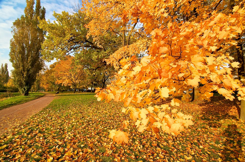 Yellow leaves and golden sun