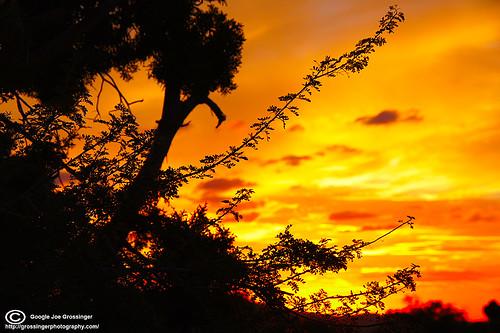 sunset red yellow photography texas desert joe el silouette lila paso orance grossinger