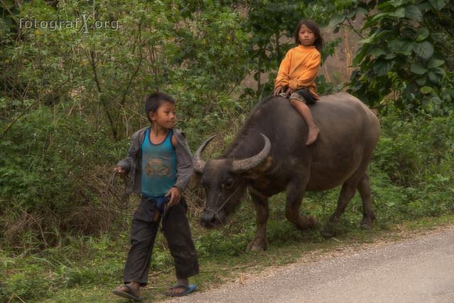 riding the bufalo (Lao People's Democratic Republic)