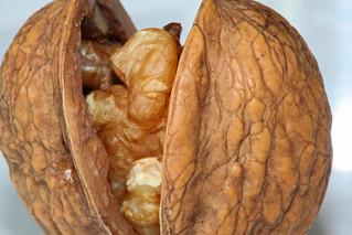 Walnut | by zoonabar