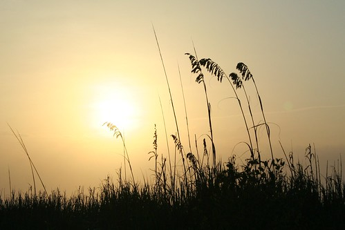 sunrise canon myrtlebeach golden southcarolina july silouhette 2010 seaoats