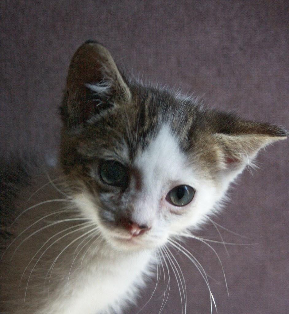 A Kitten named Spot by Chriss Pagani