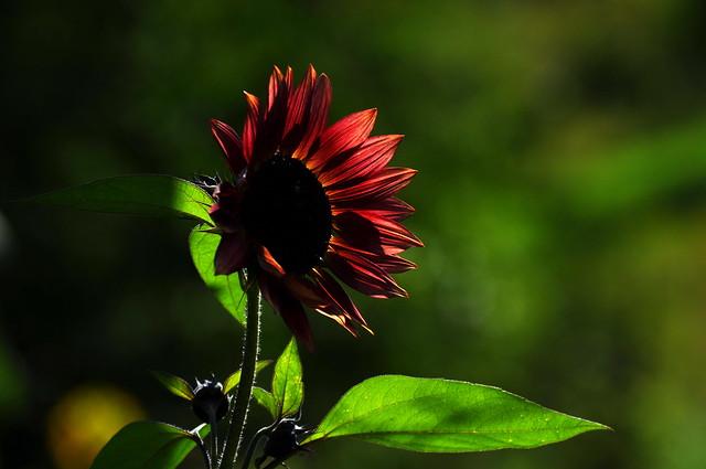 Soleil rouge 2