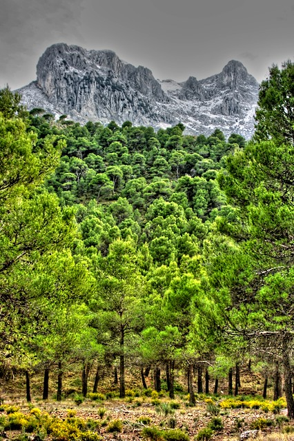 Sierra Arana1