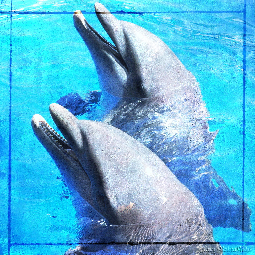 Dolphins in texture