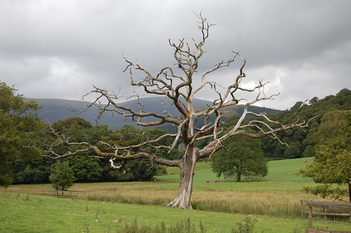 Dead tree, Derwent Water | by michellebflickr