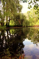 Where the willow weeps