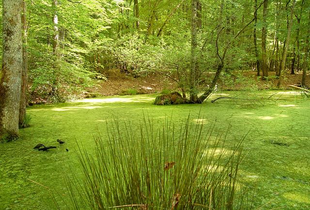 La mare - Forêt de Tronçais (Allier)