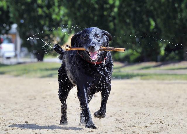 ein glücklicher Hund...  Olivia1