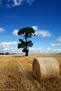 Rias tree-03546