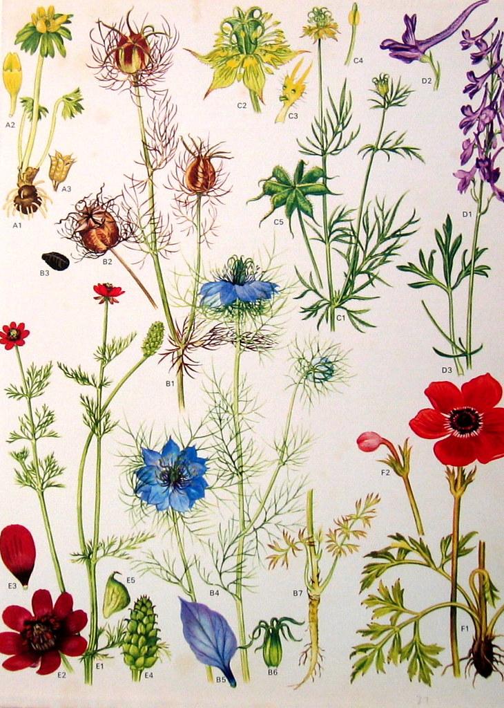 Vintage Botanical Prints Flowers | Nina | Flickr