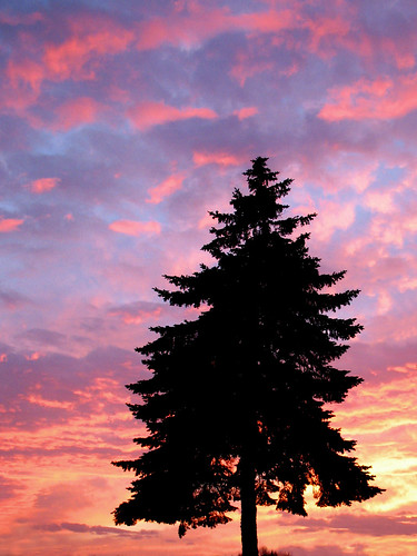sunset sky color colour tree nature clouds worldland