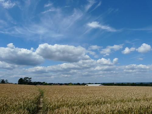 Field of Wheat | by Gabludlow