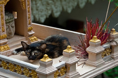 The pious cat