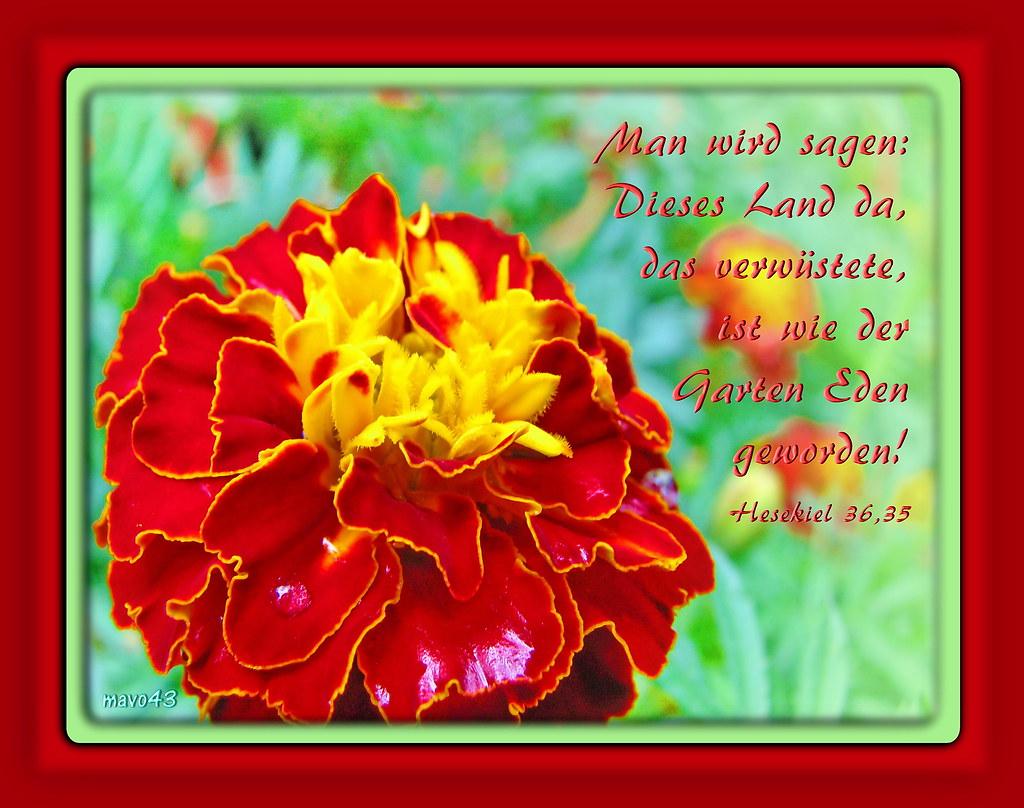 Garten Eden Garden Of Eden Gott Spricht Von Der Zukunft Flickr