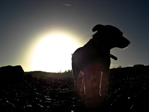 beach silhouette sunrise jrt terrier snaps jackrussell 652 doniford 52weeksfordogs