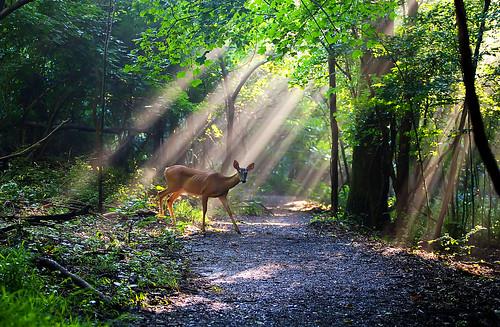 park light sun lake nashville state path tennessee deer hero winner rays brentwood radnor thechallengefactory herowinner thepinnaclehof kanchenjungachallengewinner k2challengewinner tphofweek133