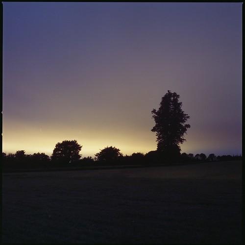 longexposure trees kilkenny field sunrise overcast