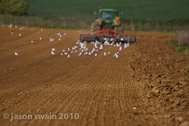 When the seagulls follow the tractor. Bastardised Farming idioms #2