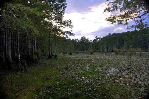 sunset landscape nationalpark nikon texas purple cypresstrees villagecreek d90 kountze bigthicket