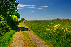 Early Summer Landscape #4