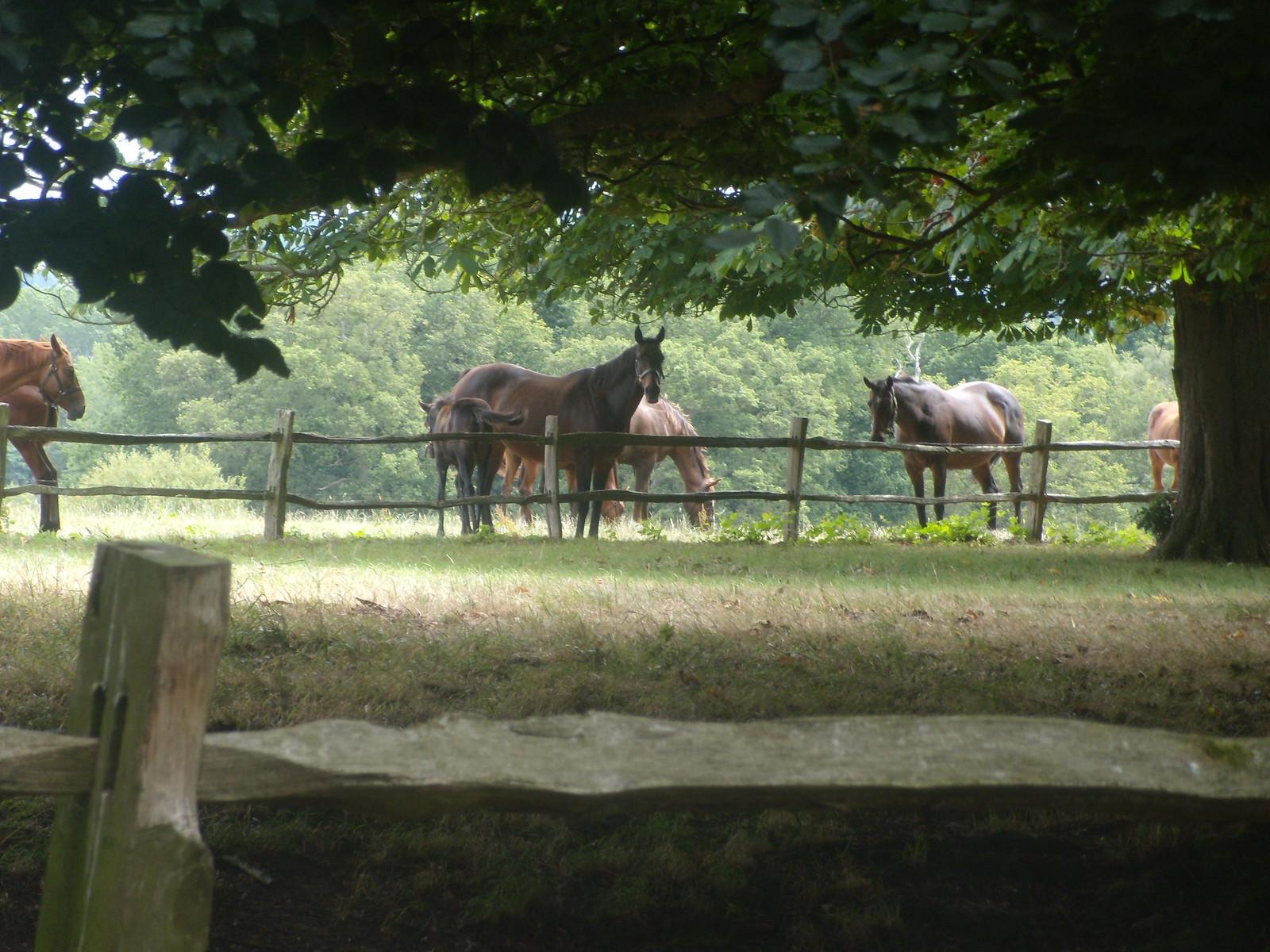 Horses Balcombe Round walk