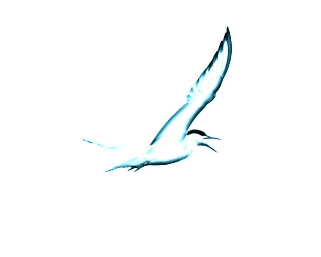The Essence of Tern