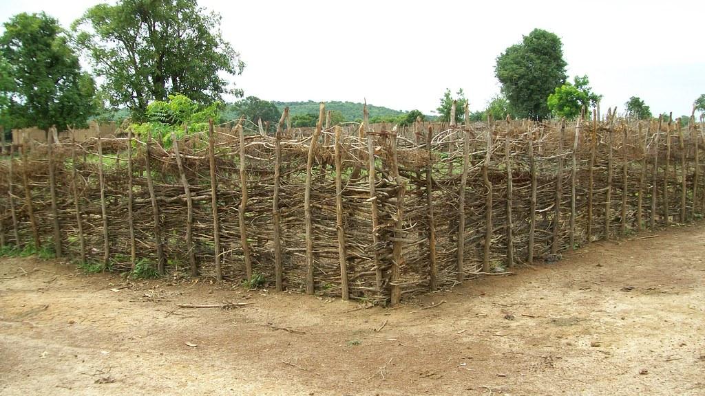 mali - living fence