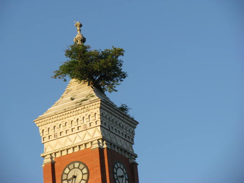 Greensburg Indiana Courthouse Two Trees Are Growing On