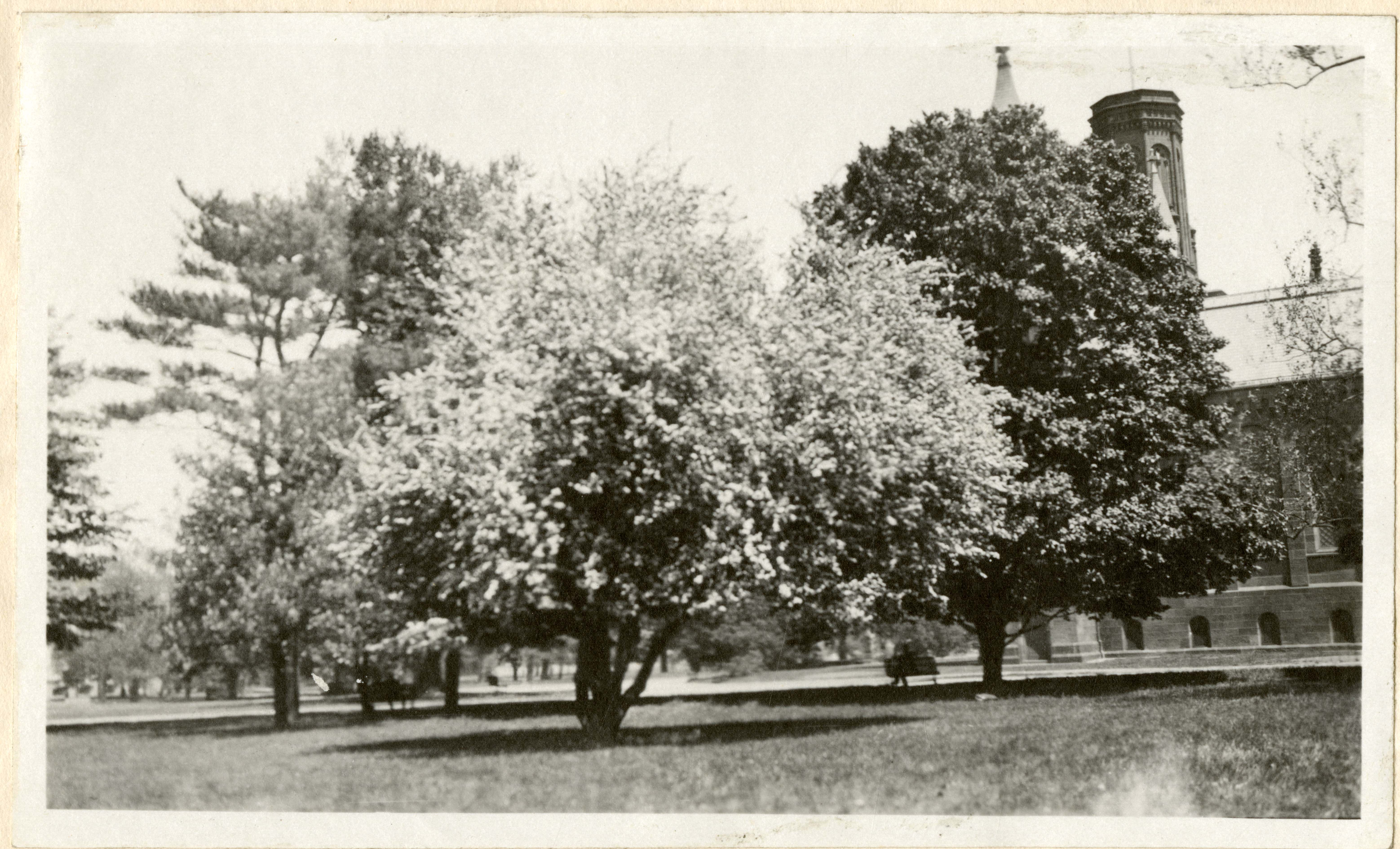 Trees and Flowers with the Smithsonian Castle in the background