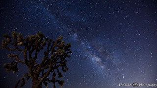 Joshua Tree Under the Milky Way on Vimeo by Henry Jun Wah Lee | by www.nevercrossablackmamba.com