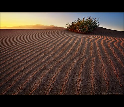 sunset landscape sand desert dune palmsprings sage ripples