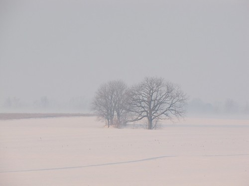 winter snow storm weather fog rural sunrise farm country farmland icestorm icy icefog wintersunrise badweather winterstorm winterweather wintermorning ruralamerica coldmorning snowfog icecovered icecoated icecoveredtrees