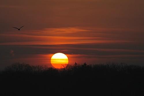"morning light sky sun sunlight lake tree sunrise michigan gull oange platinumheartaward ""flickraward"""