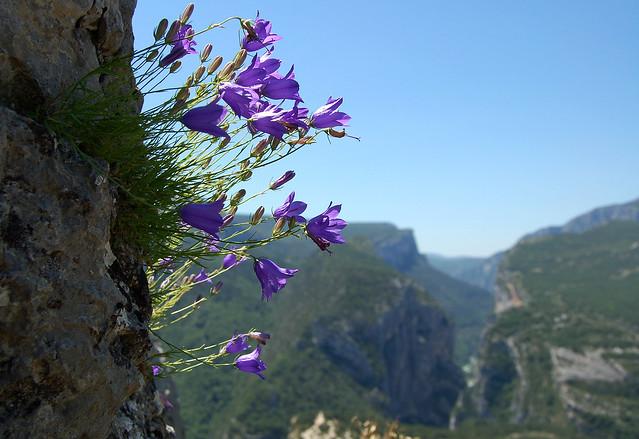 Gorges du Verdon - Rougon (Alpes-de-Haute-Provence)