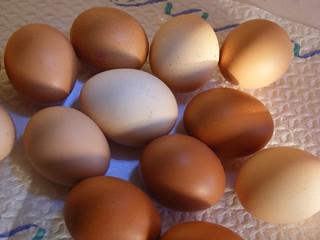 Chicken-Eggs_325223-480x360 | by Public Domain Photos